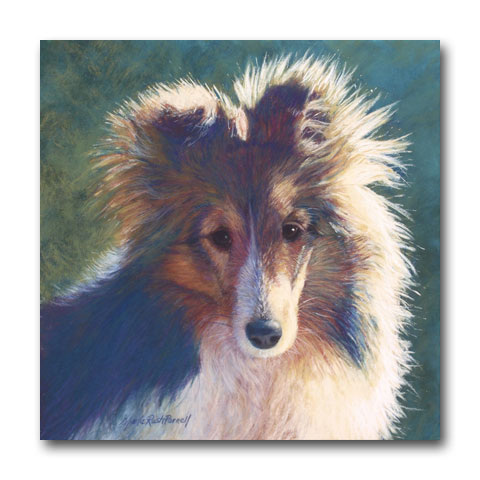 Sheltie Pup by Marla Rush Parnell
