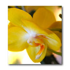 Yellow Orchid 3 by William Clay